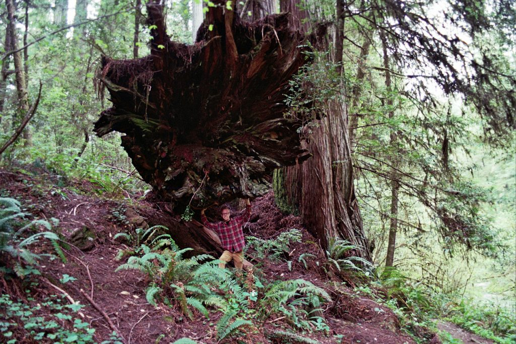 A film photo of the redwood forest in northern California