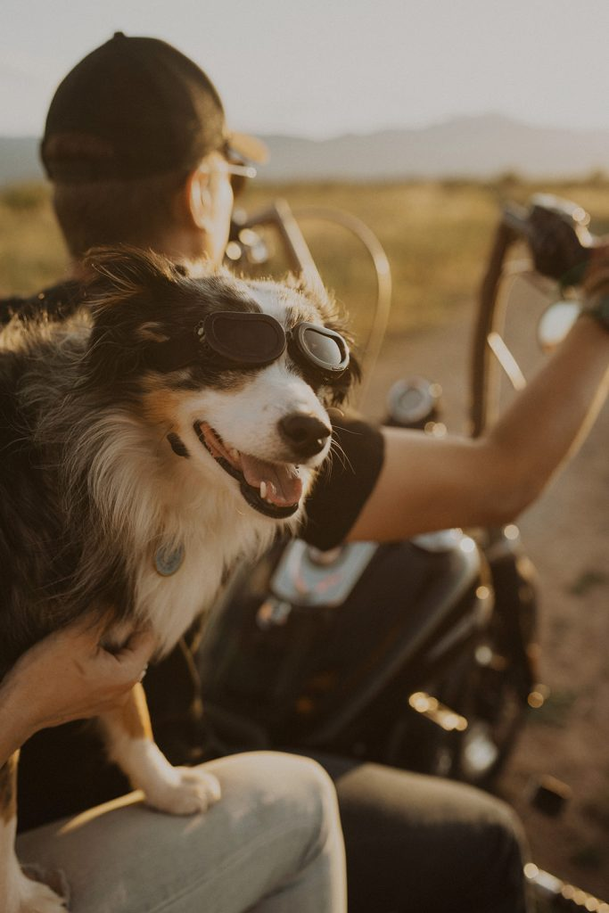 A couples dog on their motorcycle during their couples session in Red Rock Canyon, CO