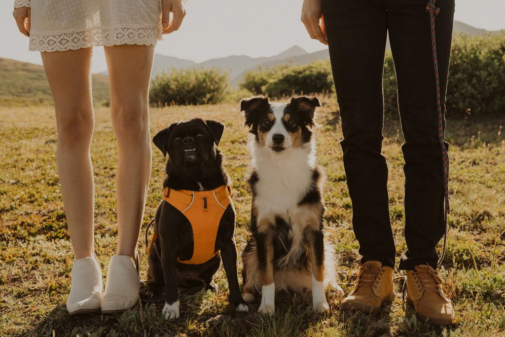A bride and groom with their dogs during their elopement